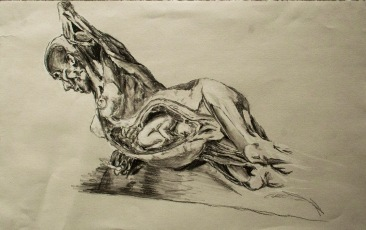"Drawn at ""Body Worlds"""