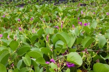 Flowering Plants in Hawaii
