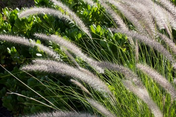 Grass in Hawaii