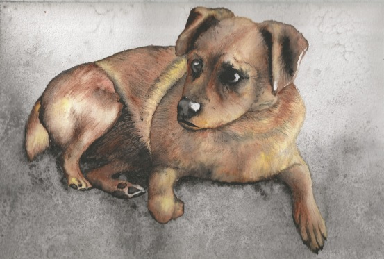 Watercolour painting of a small dog