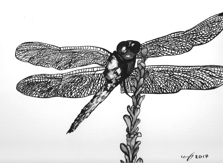 Watercolour painting of a dragonfly on a plant