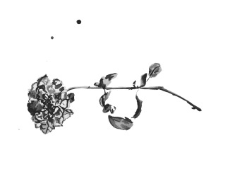 Painting of a single rose