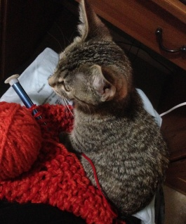 Bitty sitting on the end of a scarf in progress