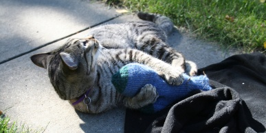 A cat playing with a knitted mitten