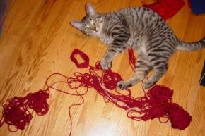 Memix unraveling a ball of yarn