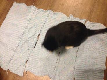 Milo walking on baby blanket panels