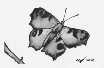 Black and white watercolour butterfly