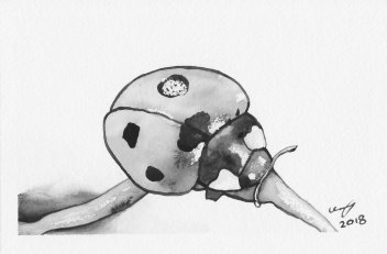 Black and white watercolour painting of a ladybug