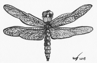 "4""x6"" watercolour painting of a dragonfly"