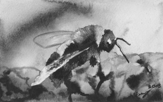 A black and white watercolour painting of a bee