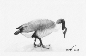 Black and white watecolour of a goose