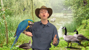 The presenter in lesson 1 of theropod dinosaurs and the origin of birds