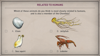 Example Quiz in Early Vertebrate Evolution