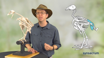 Scott with a bird skeleton